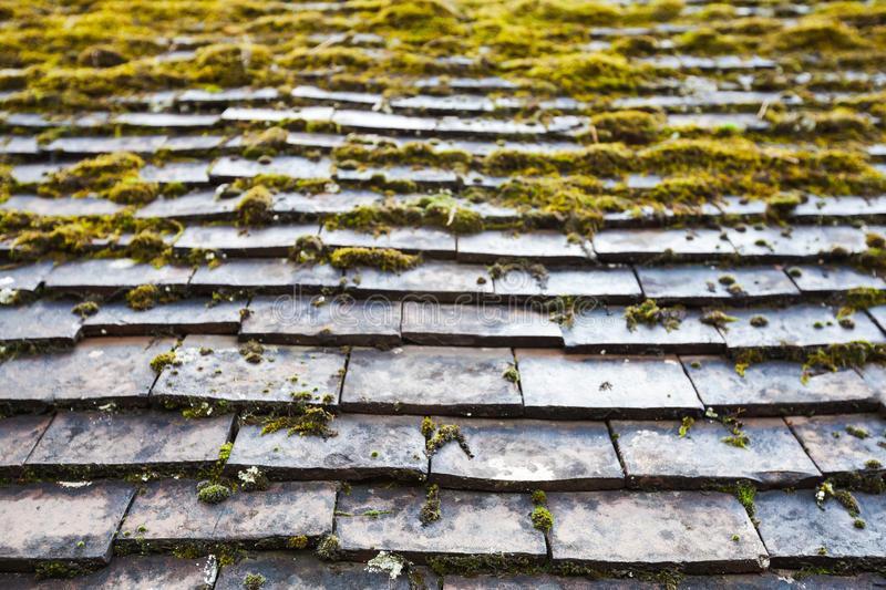Mossa på tak och takpannor