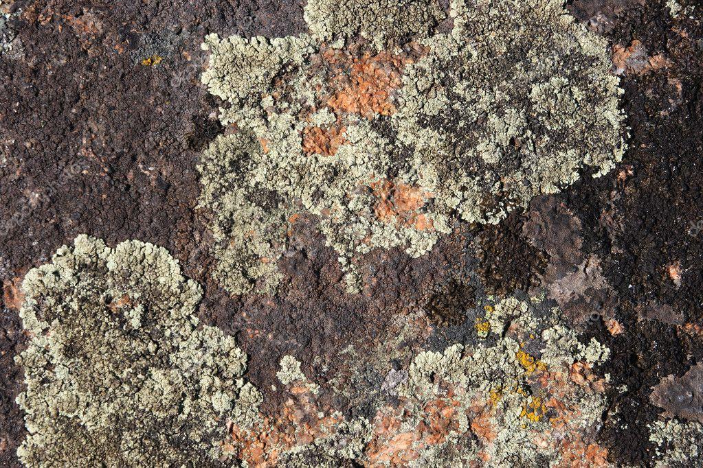 Mossor och lavar, skillnader och likheter