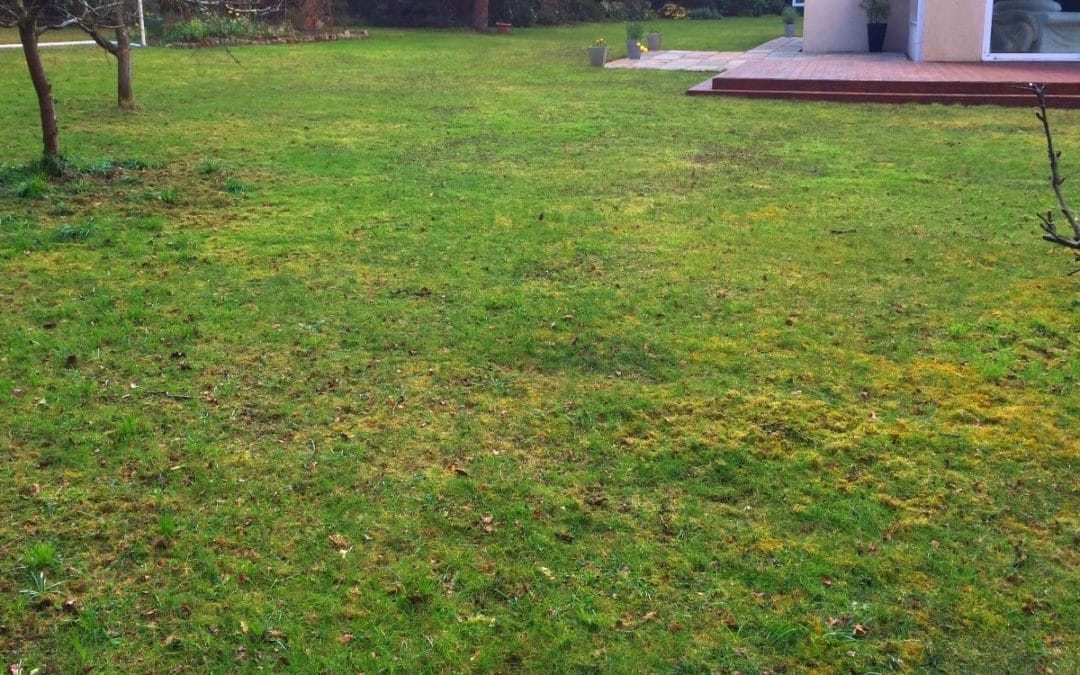 Avlägsna mossa från gräsmattan